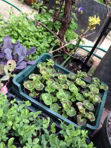 G's plants